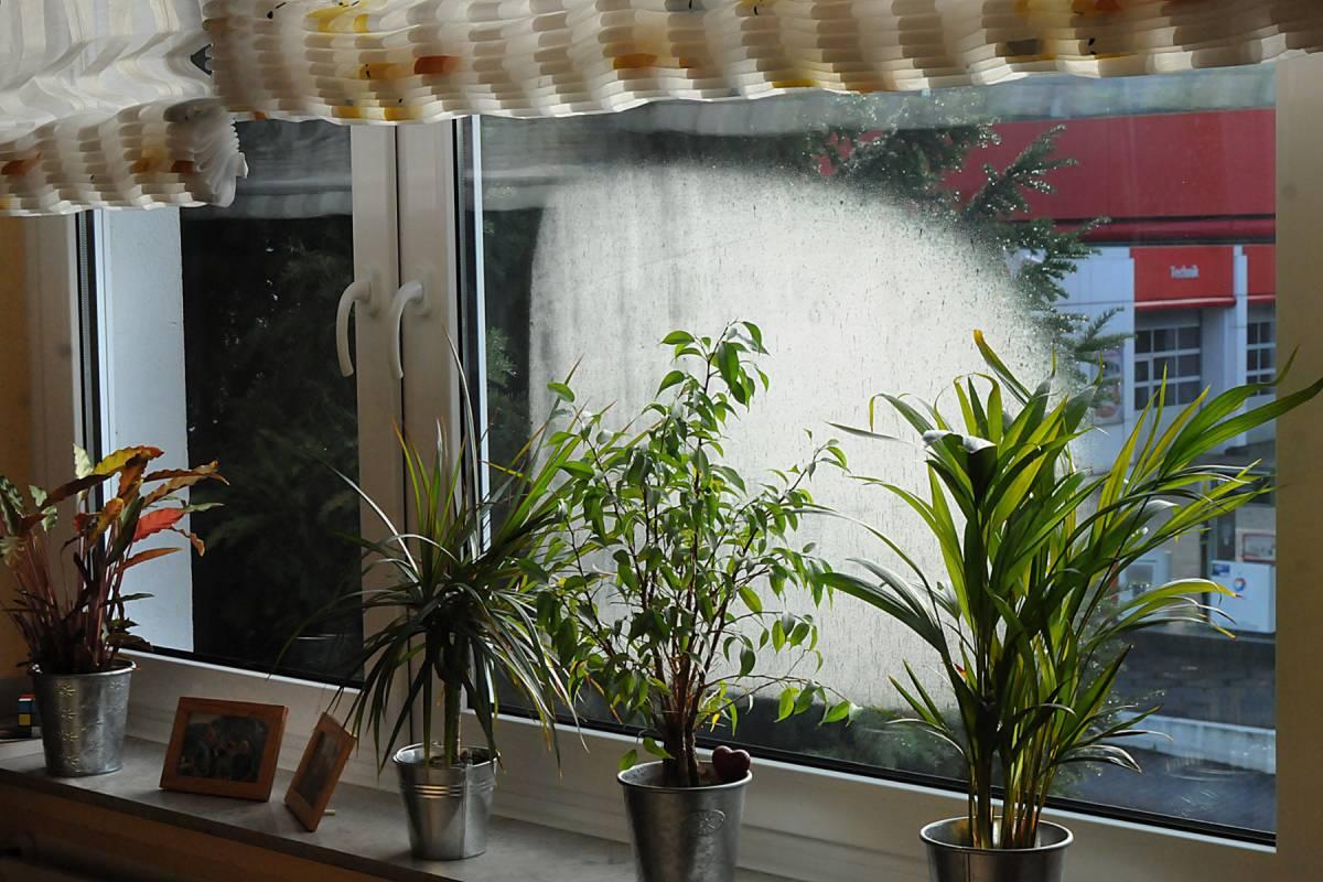 Kondenswasser Am Fenster Woher Es Kommt Und Was Dagegen Hilft Nrz