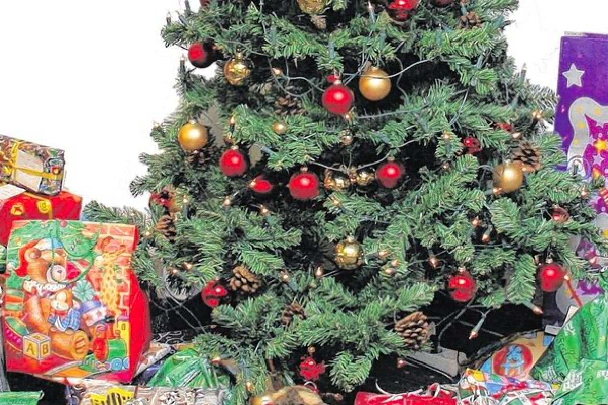 Künstlicher Tannenbaum Wie Echt.Der Weihnachtsbaum Echt Künstlich Oder Gar Keinen Nrz De