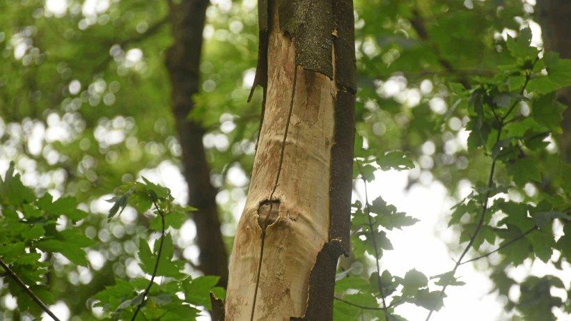 180 Bäume werden ab Montag in Wesel gefällt - NRZ
