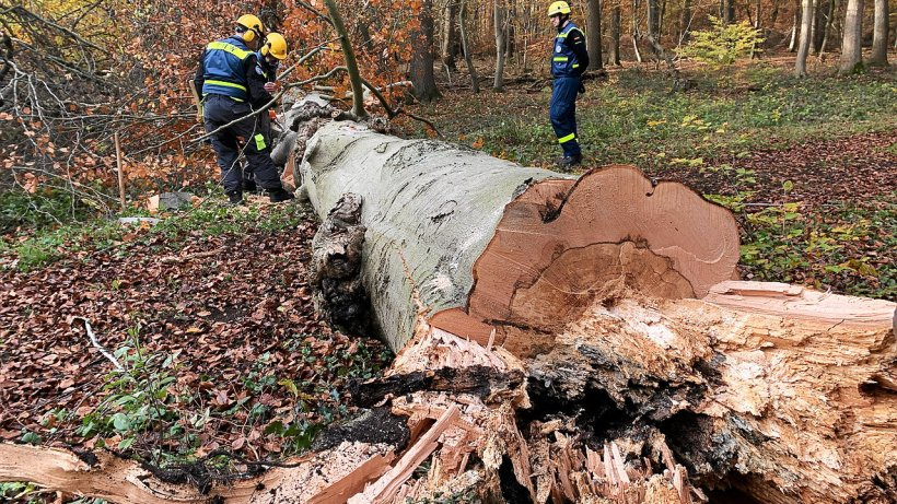 THW sprengte Bäume in Dinslaken - zur Übung und Sicherheit - NRZ