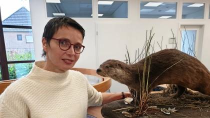 """Sie betreut das GBRA-Projekt in Sachen """"Otter"""" in Kleve: Diplombiologin Ortrun Heine. Hier mit einem Otter, der im Straßenverkehr ums Leben kam."""