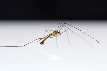 wärmestift gegen mücken